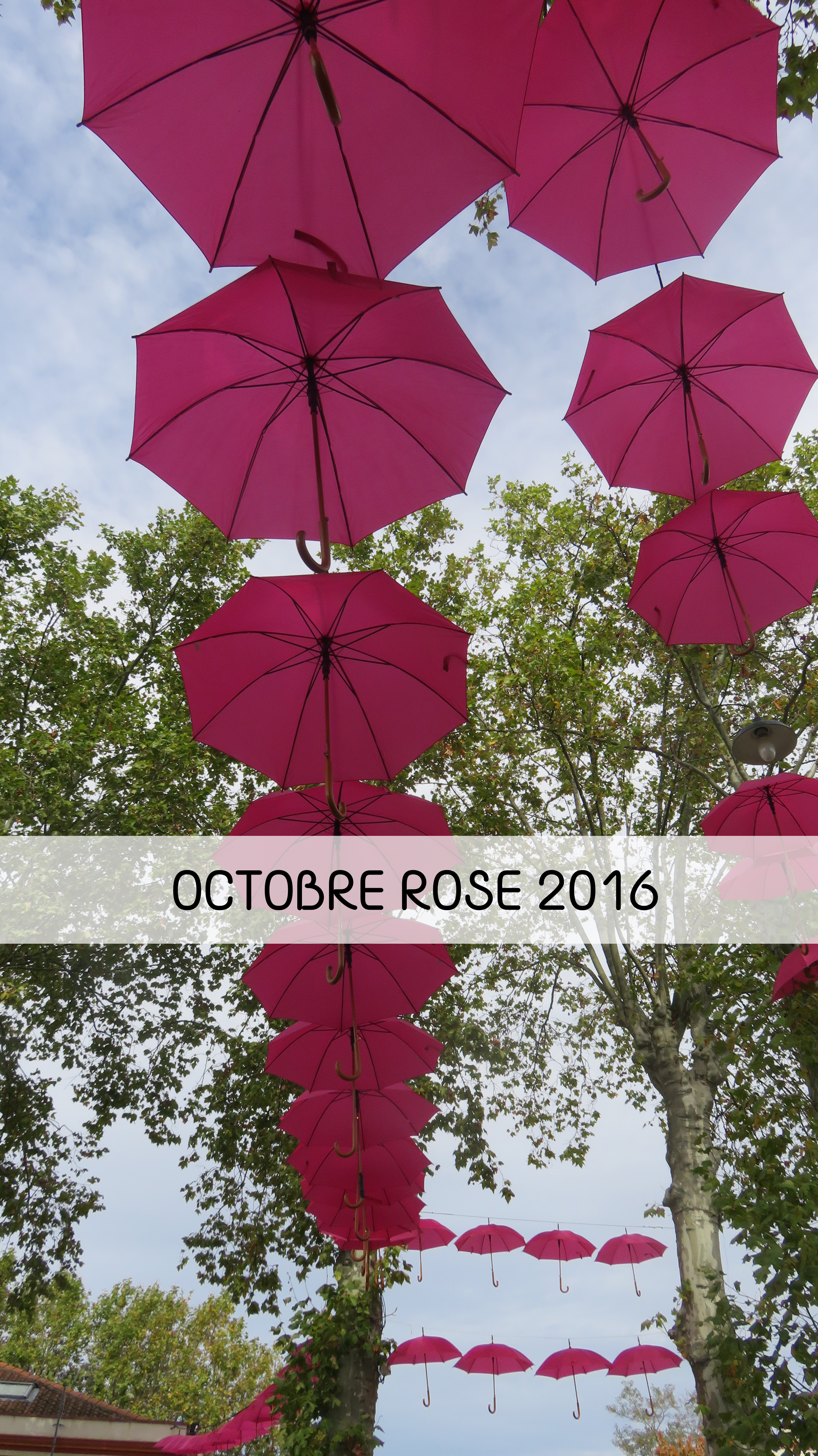 oct-rose
