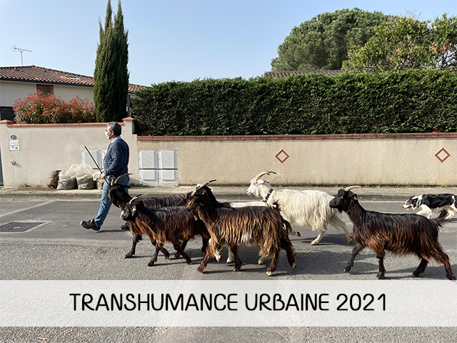 transhumance-urbaine-2021